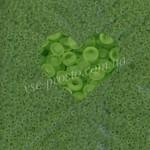 Бисер (5гр) 50220/160, салатовый (прозрачный матовый)